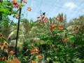 金华最漂亮的婚纱摄影义乌户外运动基地华溪蝴蝶谷