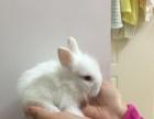 宠物猫猫兔出售