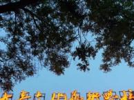 蒙太奇艺考学校