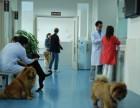 深圳市南山招商24小时宠物医院上门急诊