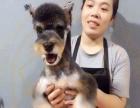 宠物美容,宠物美容师,宠物美容培训学校