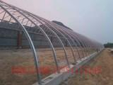 冬季梦想吃新鲜蔬菜现在有了温室大棚终于好梦成真了