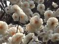 姚家寨生态园旅游度假村与您春天有个约会
