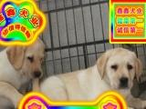 北京买拉布拉多犬——种公配种全天营业——京津冀送狗上门