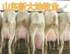 肉牛饲养 哪里肉牛便宜 肉牛出栏价格 养殖肉牛基地