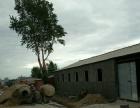 奢岭 长青公路22公里 仓库 950平米