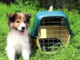 上海宠物托运物流快递公司价格寄狗狗猫咪多少钱