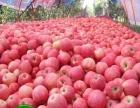 全县优质苹果种植面积达到5000多余亩.