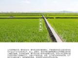 農家自產生態米 湖北正宗絲苗米不拋光