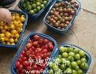 上海农家乐旅游推荐 团队游 亲子游 采桑葚摘小番茄 烧烤钓鱼