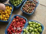 上海農家樂 采五彩小番茄吃土菜 摘葡萄西瓜 釣魚燒烤