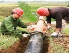 杨浦区四平路管道疏通保养 隔油池清淘服务快