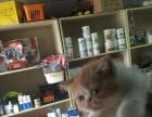 加菲猫,父母可见红 新添加小宝宝照片