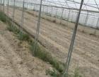 出租或者出售沙建蔬 土地 40000平米