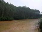 出租养殖场深水鱼塘