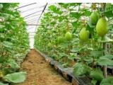 厂家特卖农用防虫网脐橙种植必用隔离害虫防落果