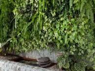 想知道在办公室做面植物墙有哪些优势吗?