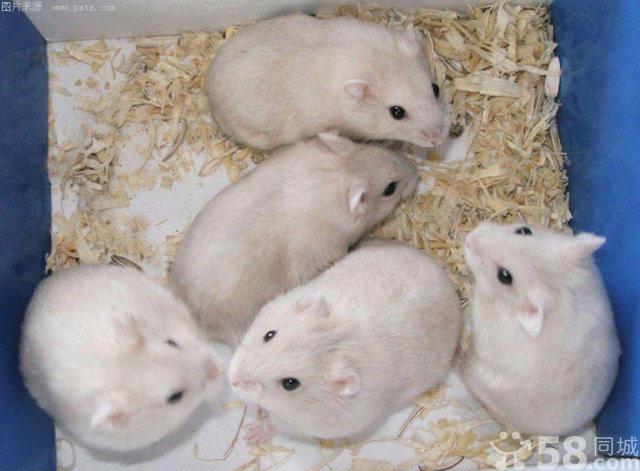 小兔子等各种小动物卖信息由列表网网友发布