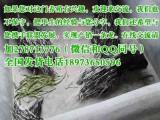 湖南豪猪养殖特种生产农场