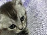 家里猫猫太多 出售