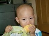 批发,水果玉米,甜玉米种子,华珍甜玉米,