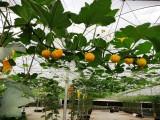 深圳宝安较美的绿色生态农场-松岗花田盛世农场