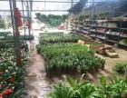有苗圃 专业室内外绿植租摆,盆景租售 防腐木绿化