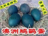 云南最大的鸸鹋蛋、澳洲鸵鸟蛋供应商