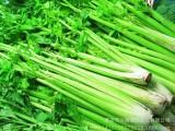 有机绿色蔬菜 新鲜蔬菜西芹菜新上市 大量出售无公害绿色蔬菜