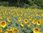 松湖生态园农家乐半拓展半休闲旅游兼顾娱乐与休闲体验
