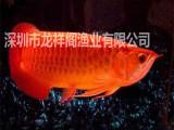 福田哪里有小型鱼缸定制?超白鱼缸批发深圳鱼缸定制