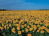 5500亩滴灌地出售