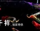 批发红龙金龙虹鱼