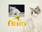 出售纯种 加菲幼猫 健康有保障疫苗做齐售后签协议