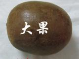 广西永福罗汉果大果短直径52-56MM
