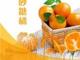 正鴻柑橘 果園新鮮采摘 品質保證