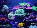 海水鱼缸 珊瑚缸定制 出售