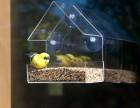 七彩云有机玻璃简约喂鸟器户外投食箱透明鸟笼