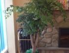 宁波绿植租赁,租花木,租室内植物
