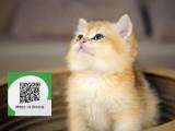 南阳哪里有加菲猫出售 南阳加菲猫价格 加菲猫多少钱