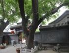 北京市东城区交道口附近出售二进四合院,产权清晰