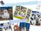寵物兔熊貓兔寶寶包郵房山樂萌文玩寵物店