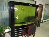 主营 专业处理鱼缸水质发绿 鱼缸清洗 鱼缸维修 鱼缸造景