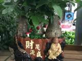 上海情人节开业花篮订花鲜花店花店送花鲜花绿植
