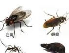 中山专业除四害,灭白蚁、灭蟑螂、灭老鼠,十年老品牌