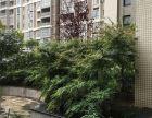 第五大道三室两厅越层送两个花园35万急售
