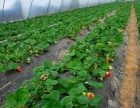 高马河生态观光采摘园招募蔬菜和水果专业种植户