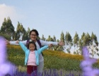 看花海泡温泉,长泰十里蓝山赏花、半月山温泉一日互动