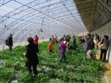 2020春季踏青-草莓采摘-團隊拓展-公司團建-郊游推薦