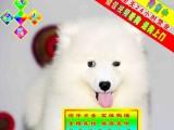 京津翼送狗上门 三个月包退包换萨摩耶犬 保终身签协议